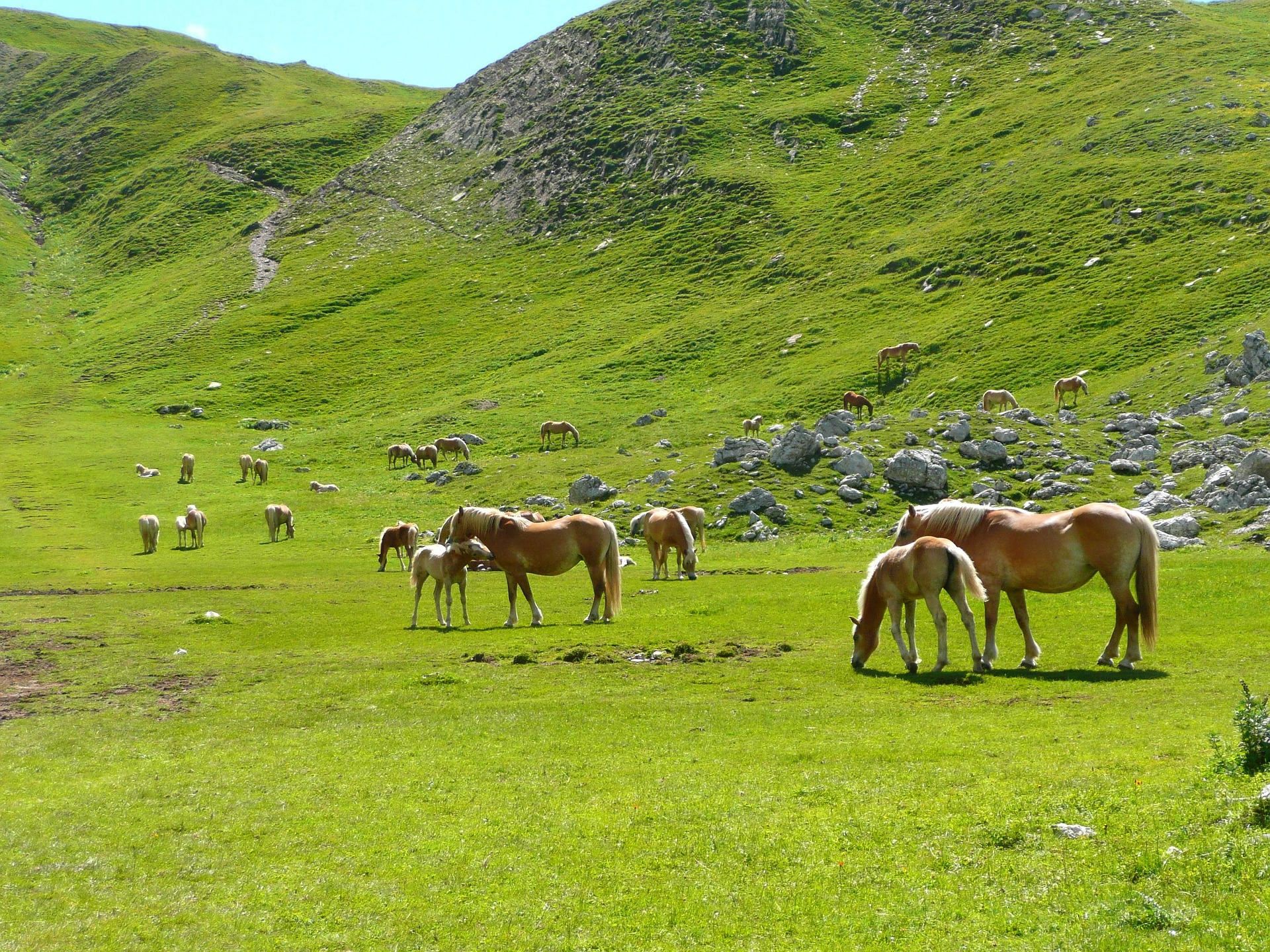 Image of horses in the mountains