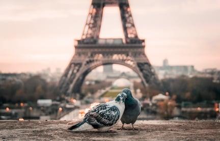 Image of birds in Paris