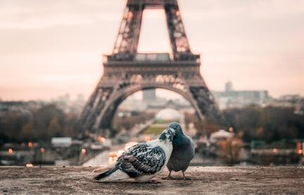 Image of birds in Paris