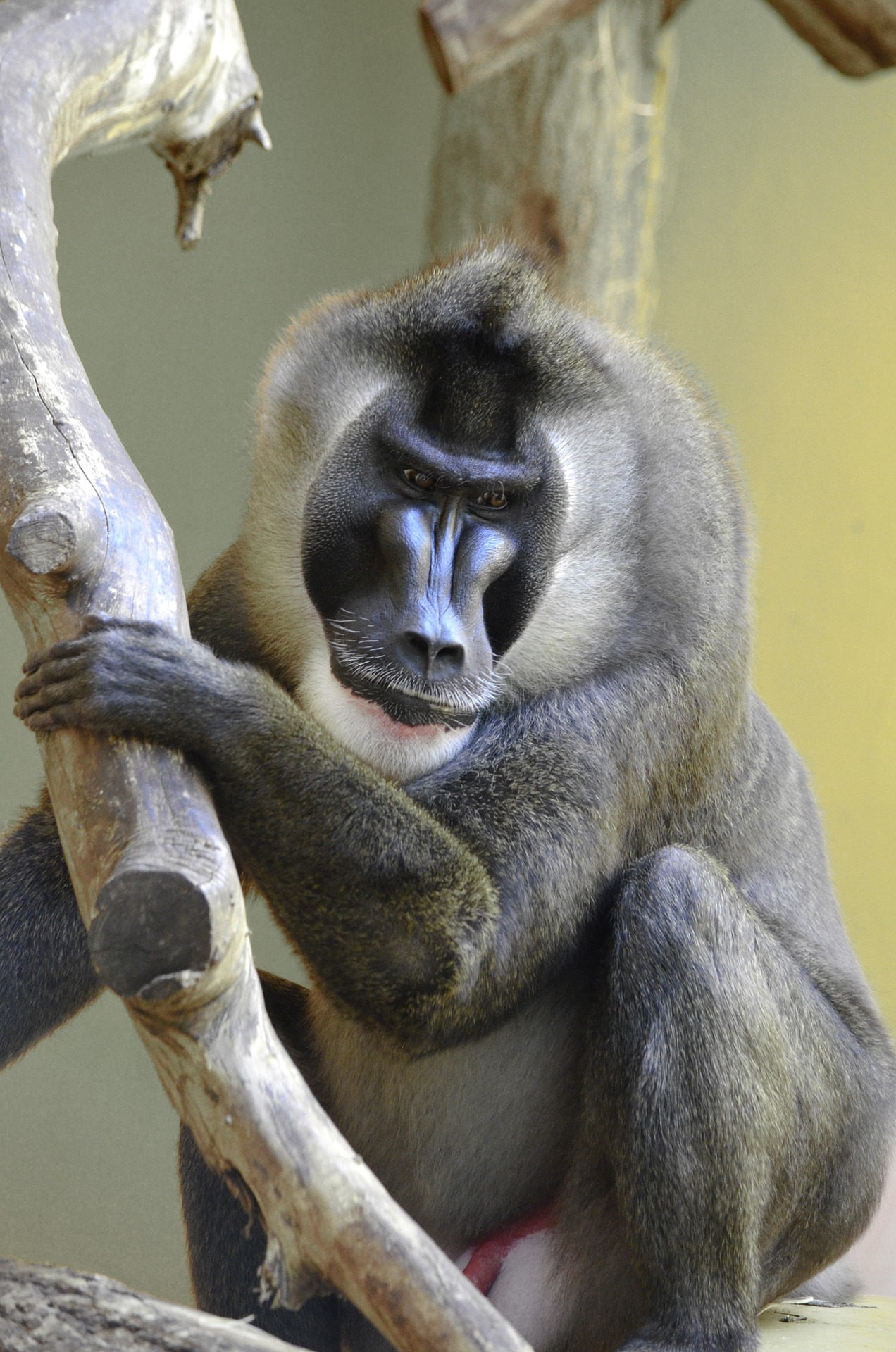 Image of a baboon in the Nigerian environment