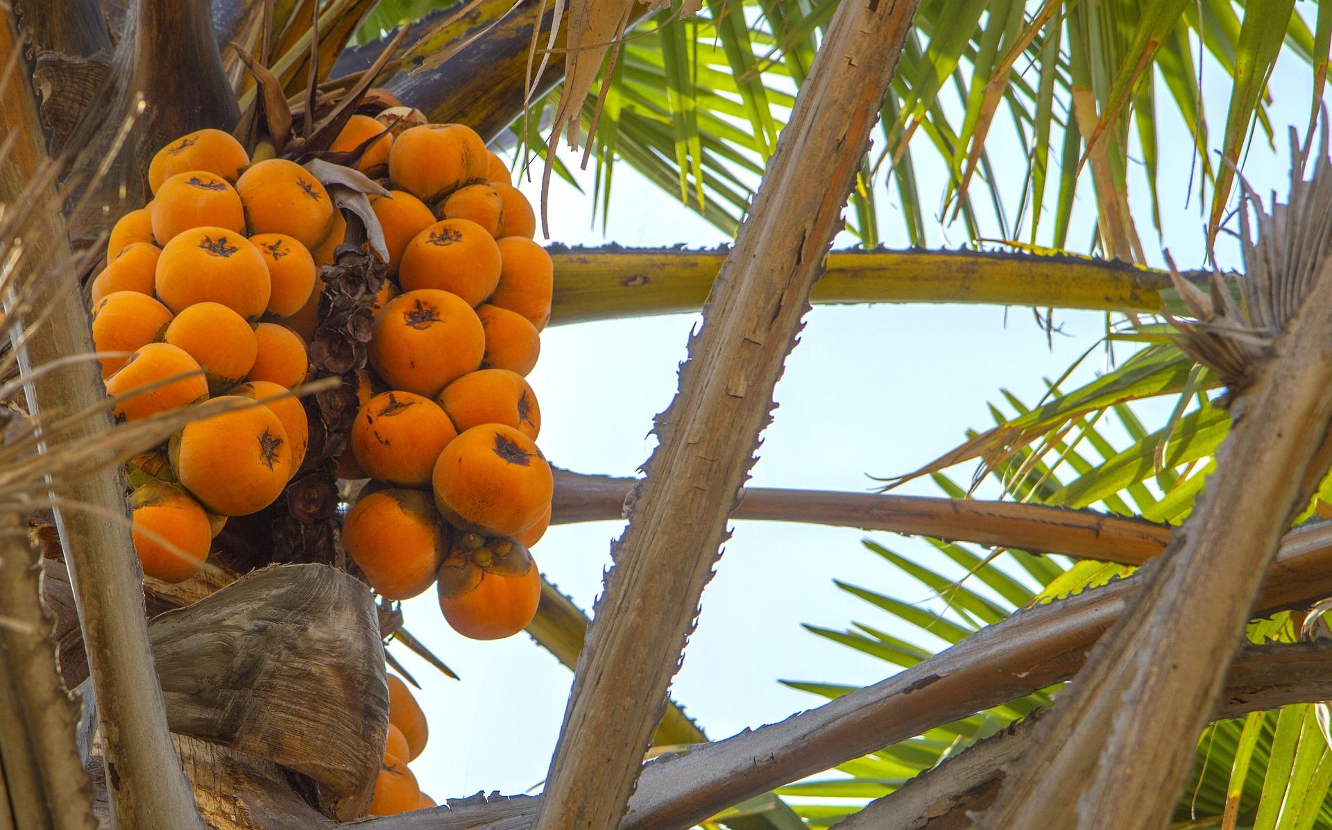 Image of fruit in Nigeria