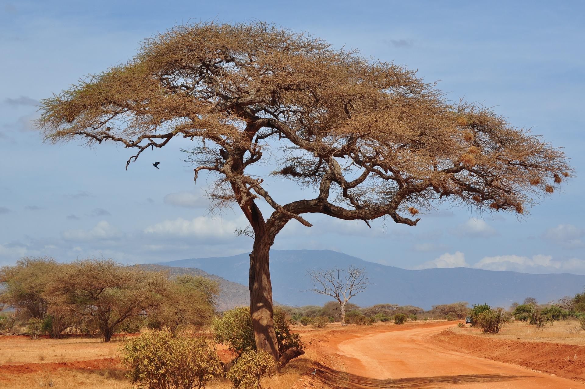 Image of the Nigerian landscape