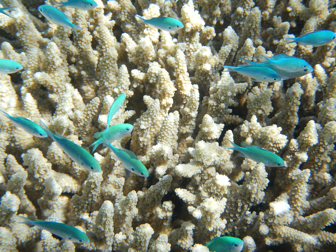 Image of fish and coral in the Great Barrier Reef