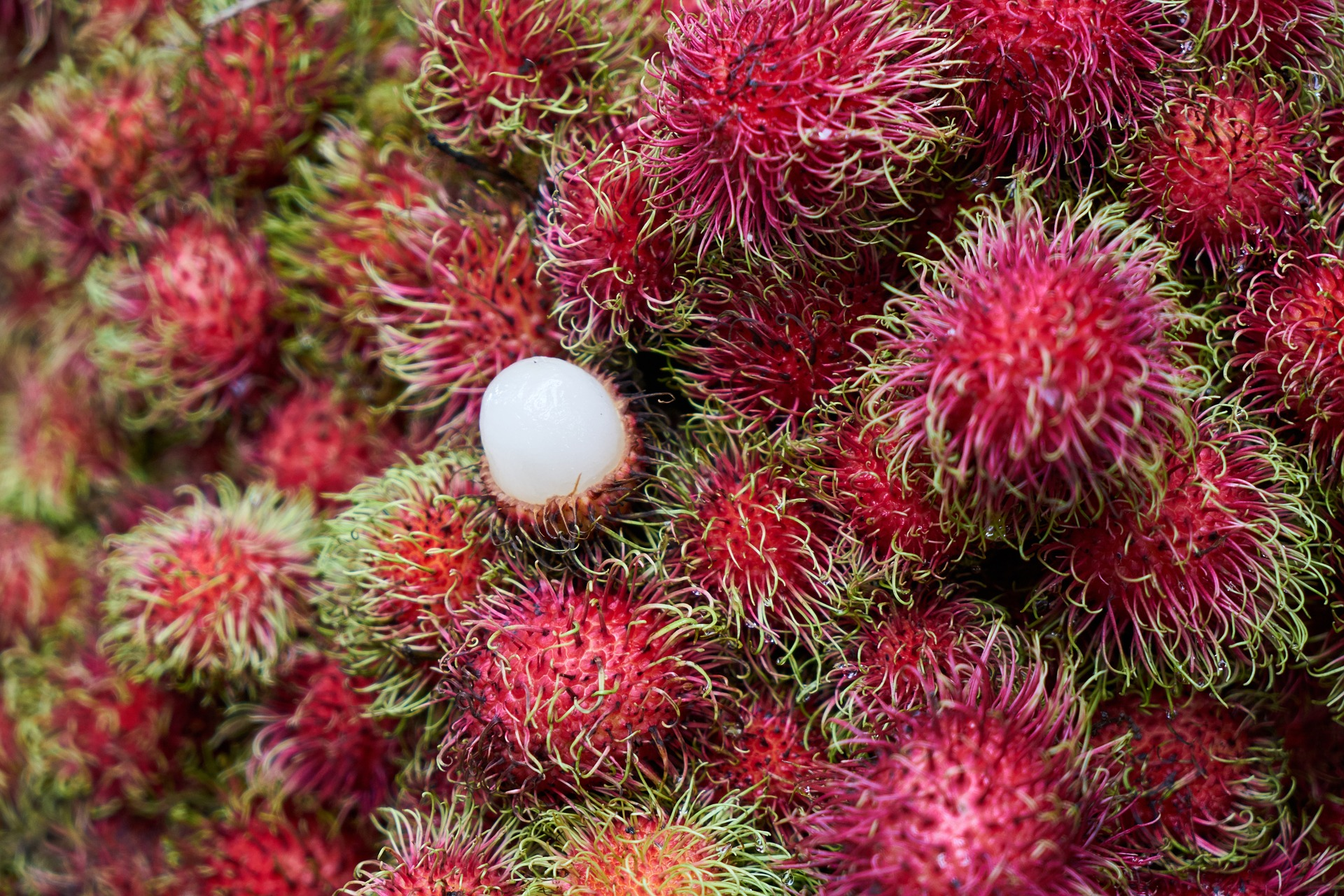 Image of fruit in Malaysia