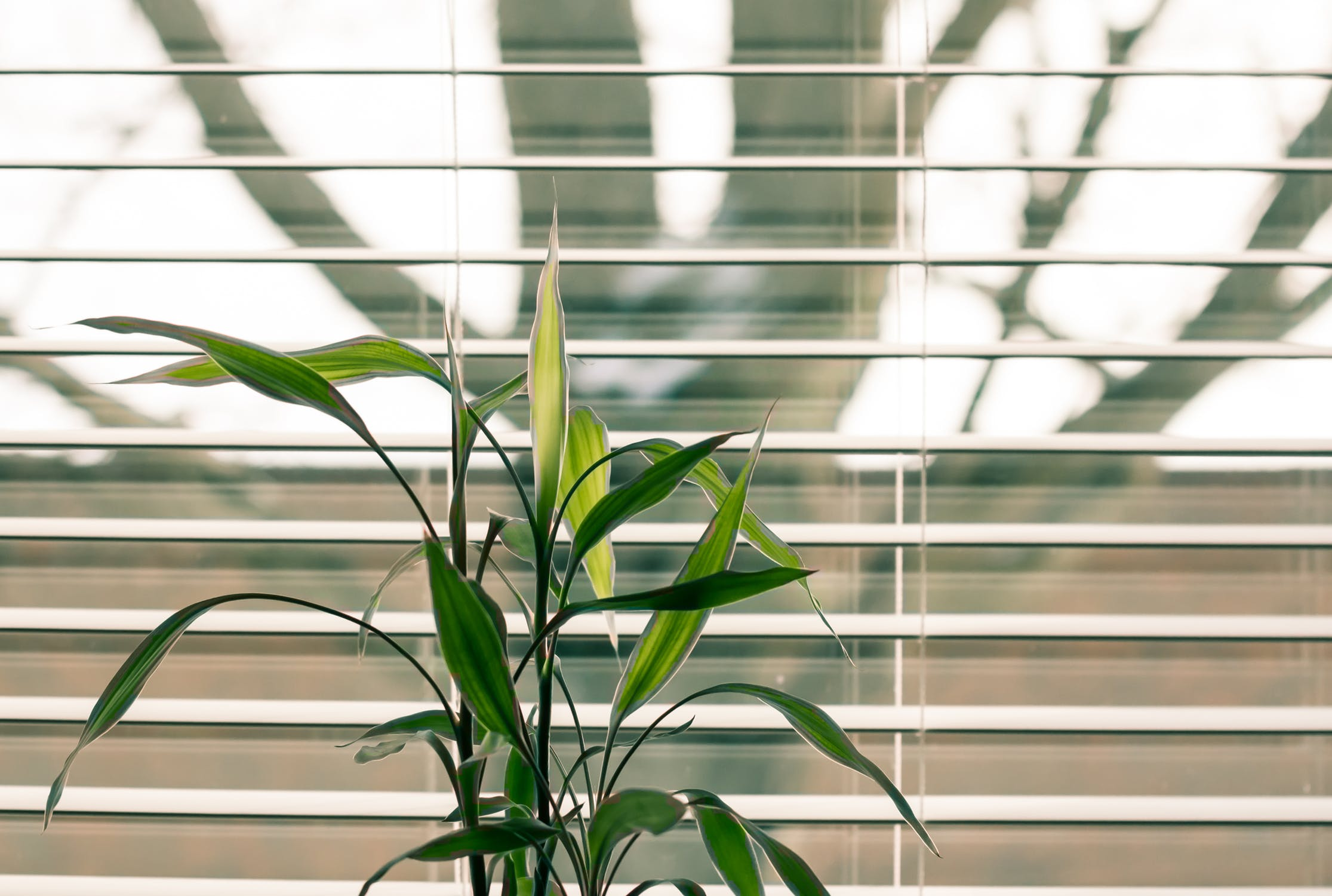 Image of open window blinds
